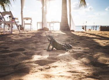 Kokomo Beach, Curaçao.
