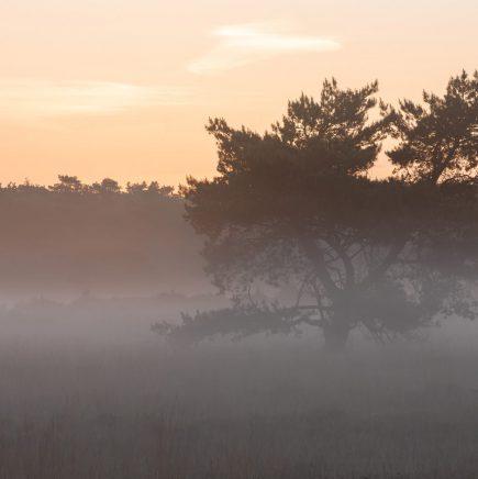 Veluwe, Gelderland.